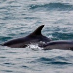 3 Dolphins Lyme bay