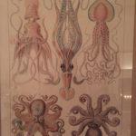 Kraken Octopus Lyme Regis Dorset