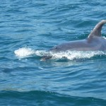 Blowhole Dolphins