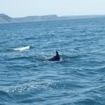 Devon Dolphins