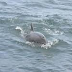 Dolphin Sightseeing Dorset