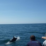 Dolphins Lyme Regis Dorset