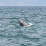 Charmouth Dolphins Dorset